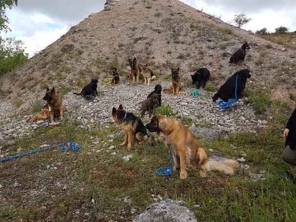 Szkolenie psów Kielce