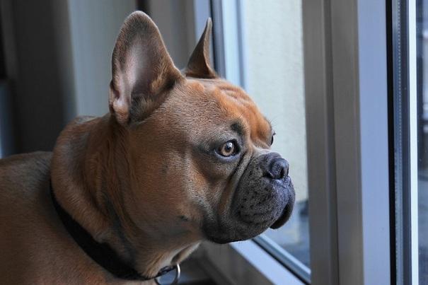 Niepokoi Cię zachowanie Twojego psa?